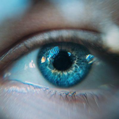 image La vision - Xavier Mainguy