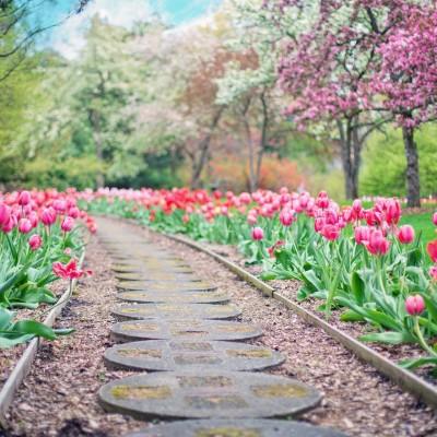 image Confinement et jardinage : nos conseils !