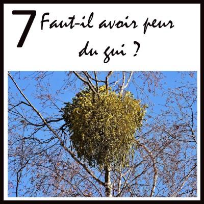 Faut-il avoir peur du Gui sur les arbres ? cover