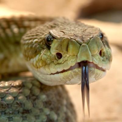 Accident sur l'A1 : un dizaine de serpents énormes retrouvés !