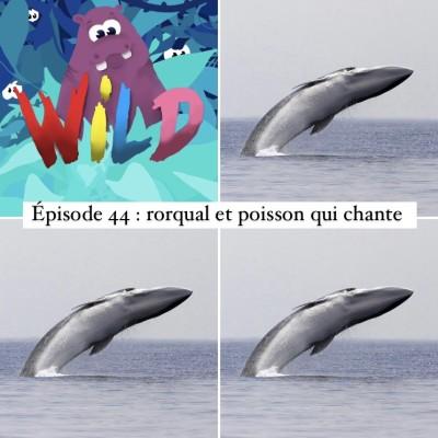 WILD#44- Rorqual et poisson qui chante cover