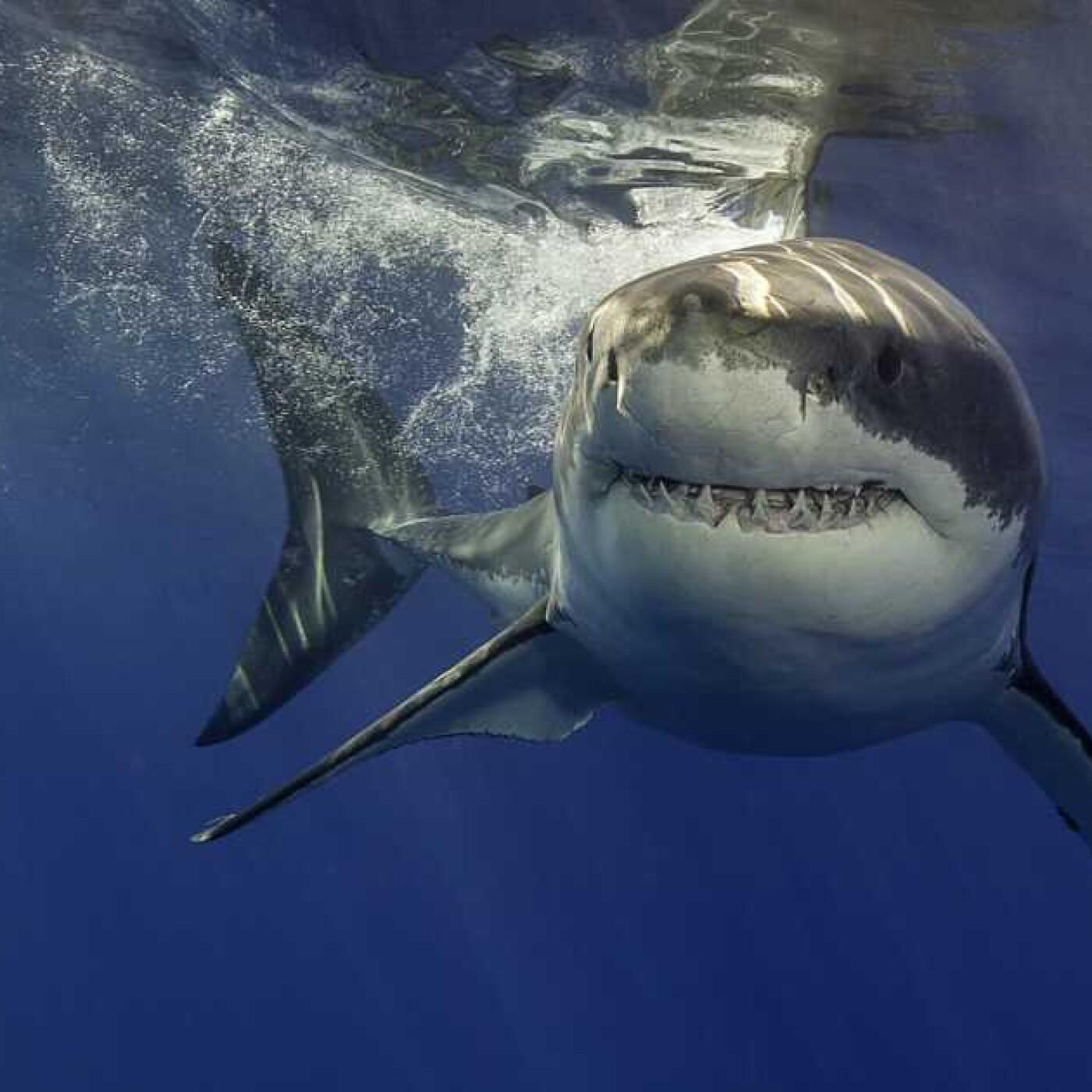 Best of d'été 03: S02E06 Requins 2/2: de la passion à la protection, Cyrielle Houard