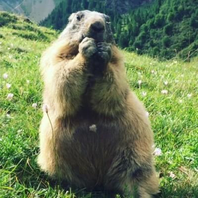 Wild - L'école à la maison #7- Les Marmottes cover