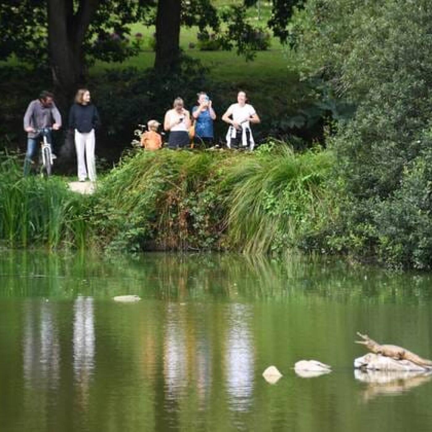 Un crocodile dans le Finistère - 23 08 2021 - StereoChic Radio