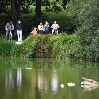 Un crocodile dans le Finistère - 23 08 2021 - StereoChic Radio cover