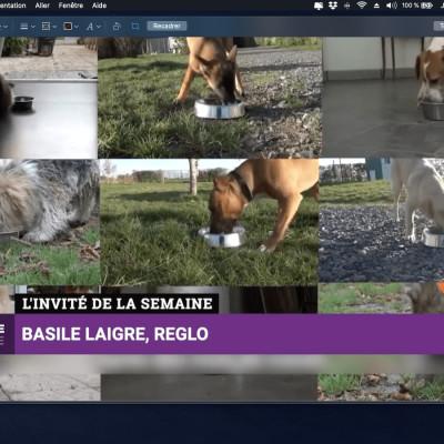 Basile Laigre - Croquettes pour chien REGLO - Business Club S2021 E63 cover