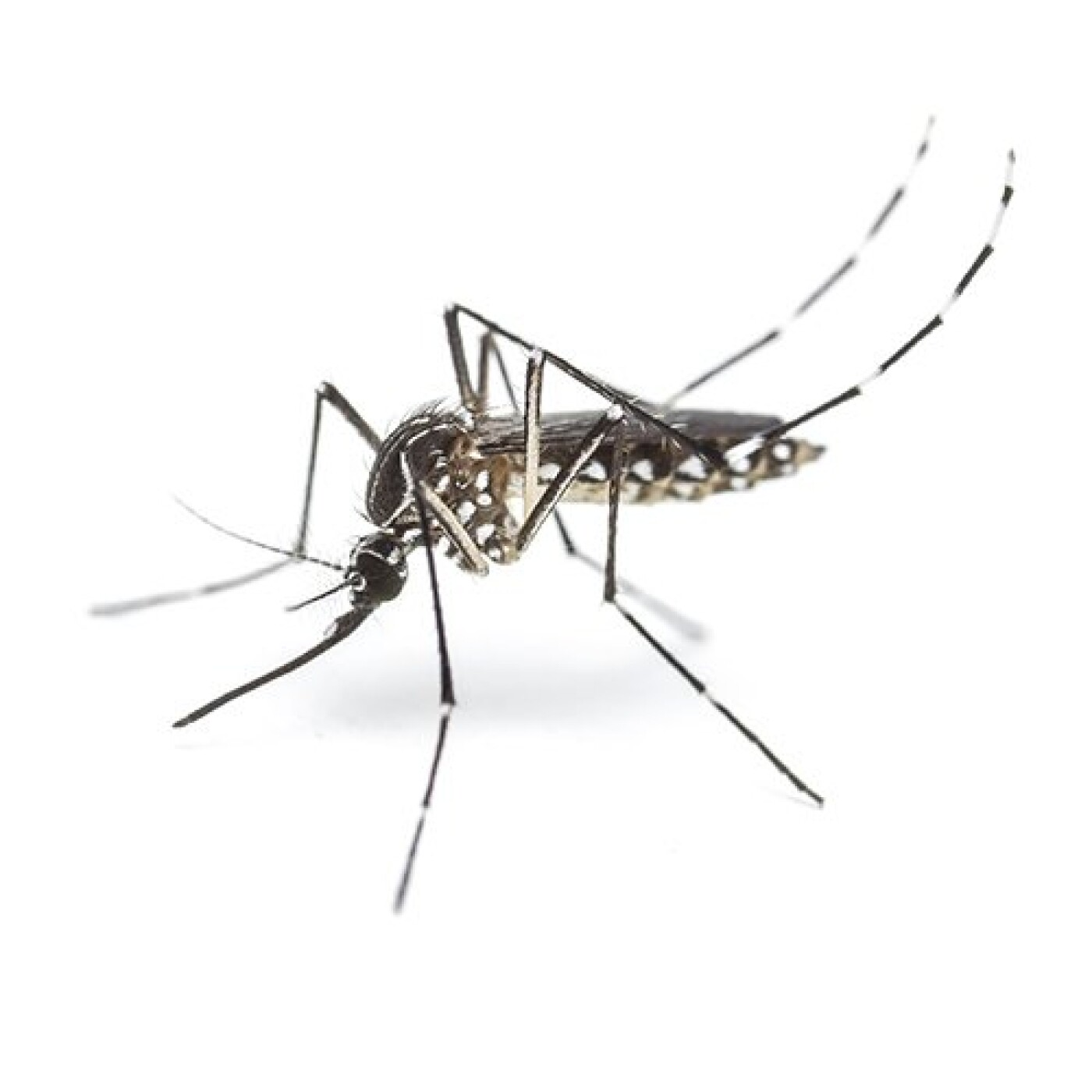 Humeur du jour : Comment un moustique a pourri ma nuit ! - 16 06 2021 - StereoChic Radio