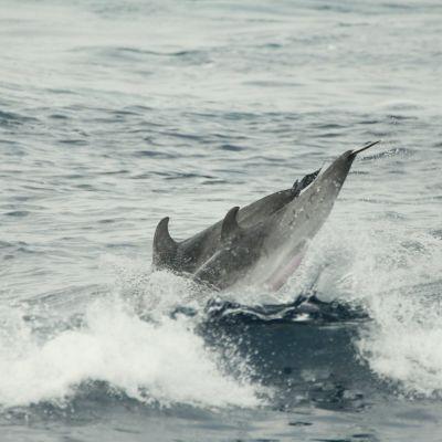 image sur les traces des dauphins