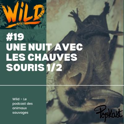 Wild #19 - Une nuit avec les chauves-souris (1/2) cover