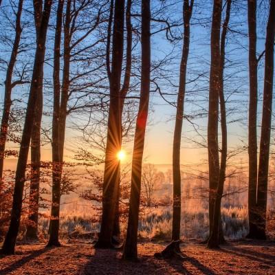 Naviguez sur internet et plantez des arbres ! cover