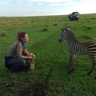 Bout de brousse - le parc national du Kruger en Afrique du Sud cover