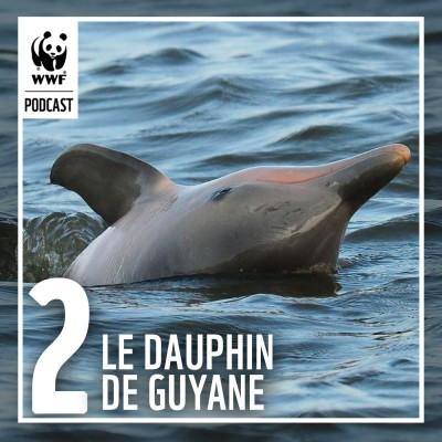 Épisode 2 : Étudier le dauphin de Guyane pour mieux le protéger cover