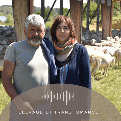 Épisode 11 - Élevage et transhumance cover