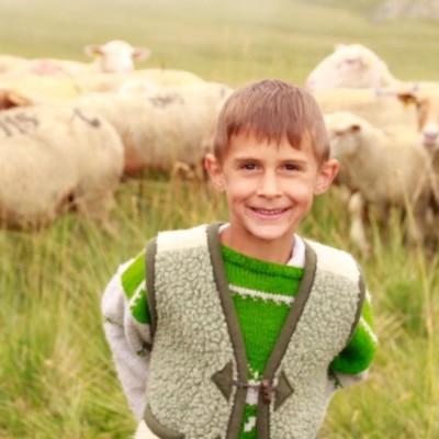 Wild #4 - L'école à la maison - Les Chiens de berger cover