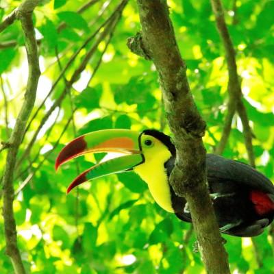 Wild - L'école à la maison #4 - La jungle magique des mayas cover