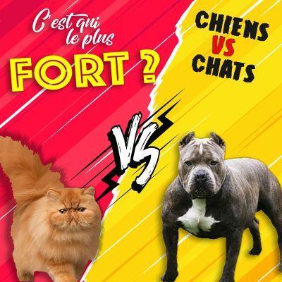 image Les chiens contre les chats, le combat final d'une rivalité millénaire !