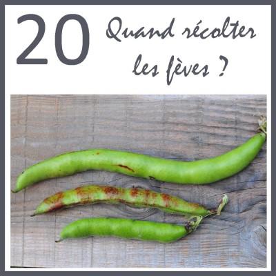 20 - Quand et comment récolter des fèves ? cover