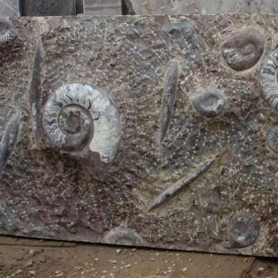 Fossiles : idée de sortie en Normandie cover